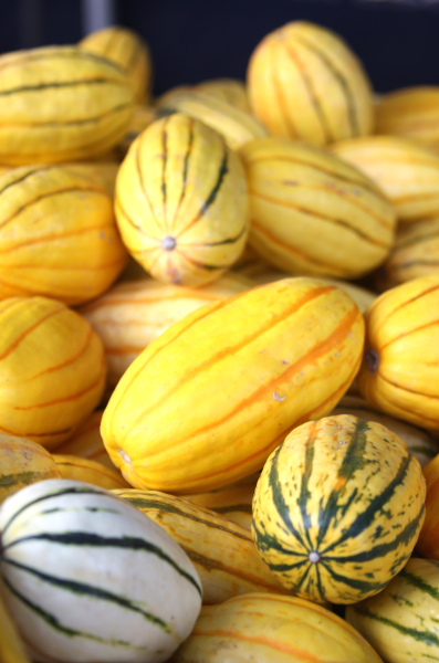 delicata squash at farmers market